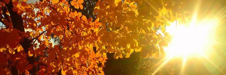 Золотая осень не за горами